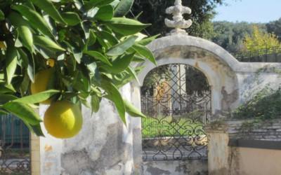 Rivalutare la città con l'Arte: Viteculture al Casale dei Cedrati